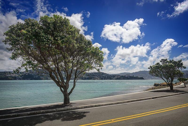 Μεγάλα όμορφα δέντρα κατά μήκος της ακτής στοκ εικόνες με δικαίωμα ελεύθερης χρήσης
