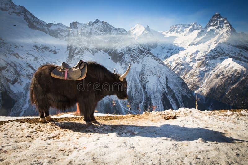 Μεγάλα yak στοκ φωτογραφία με δικαίωμα ελεύθερης χρήσης