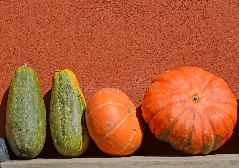 Μεγάλες πορτοκαλιές και πράσινες κολοκύθες στα πλαίσια ενός τοίχου στοκ φωτογραφία με δικαίωμα ελεύθερης χρήσης