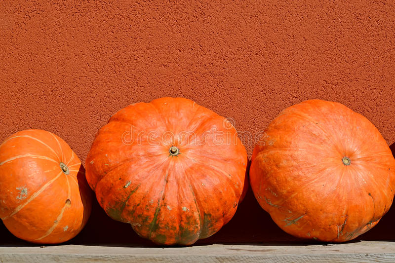 Μεγάλες πορτοκαλιές κολοκύθες στα πλαίσια ενός τοίχου στοκ εικόνα με δικαίωμα ελεύθερης χρήσης