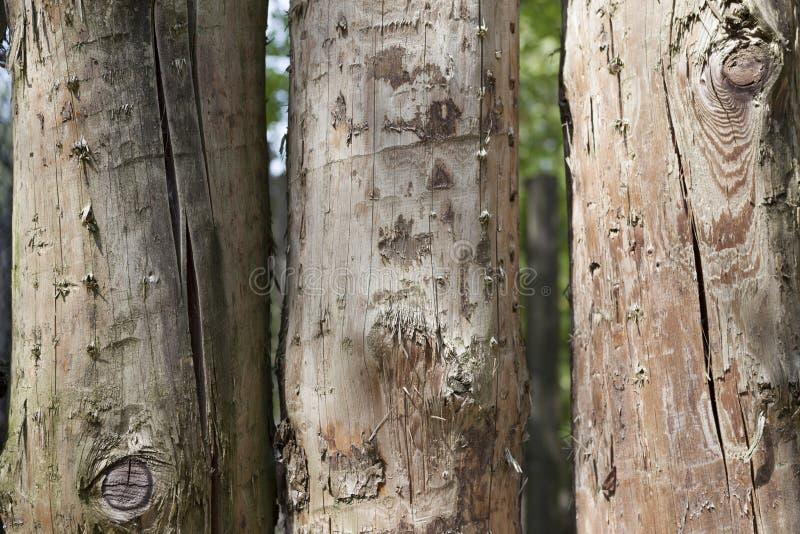 Μεγάλες, σκοτεινές, παλαιές ξύλινες σανίδες με την πράσινη χλόη Επιλογές για το οργανικό εστιατόριο Υπόβαθρο για τα φυλλάδια, κατ στοκ φωτογραφία με δικαίωμα ελεύθερης χρήσης