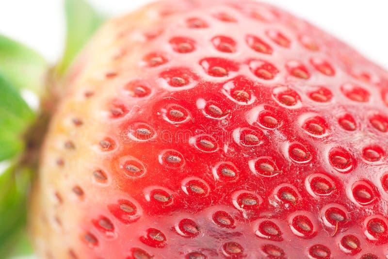 Μεγάλη κόκκινη φράουλα στοκ εικόνα με δικαίωμα ελεύθερης χρήσης