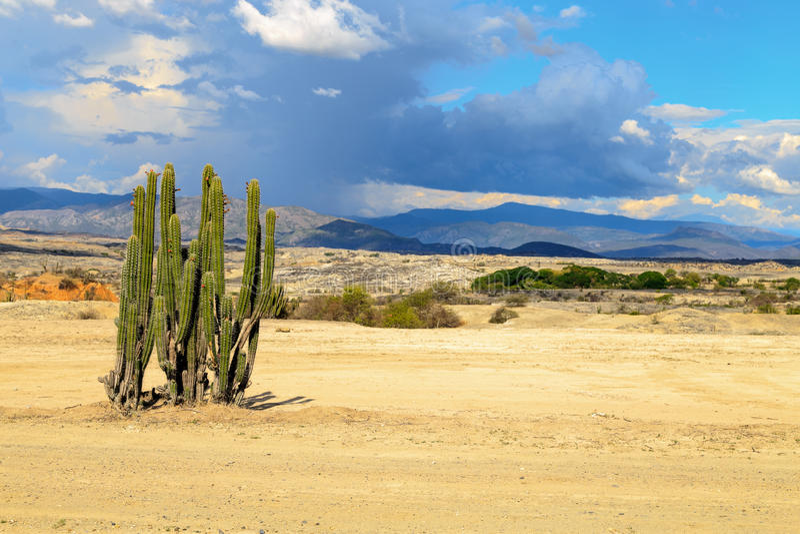 Μεγάλοι κάκτοι στην κόκκινη έρημο στοκ φωτογραφίες