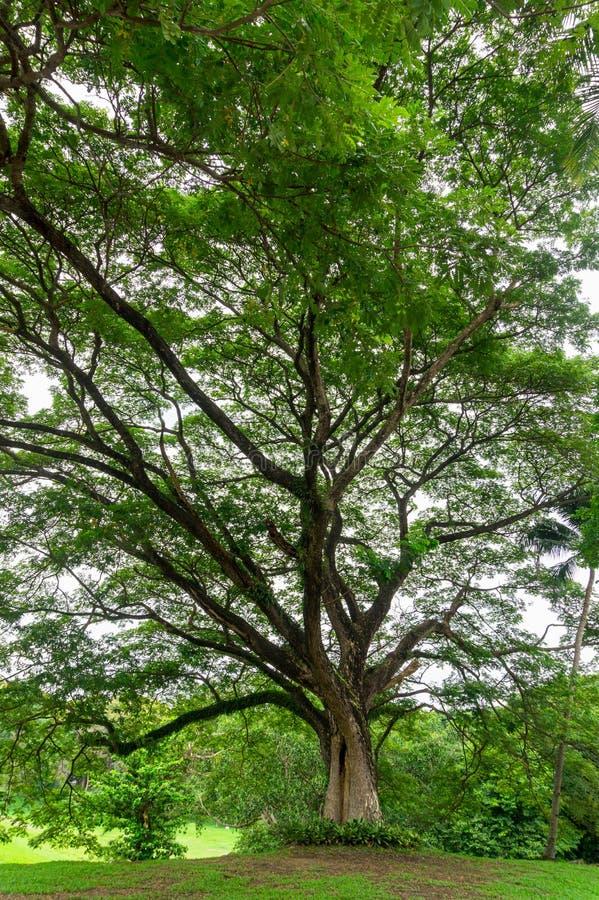 Μεγάλοι κορμός δέντρων και κλάδος δέντρων στον υπαίθριο κήπο στοκ φωτογραφία με δικαίωμα ελεύθερης χρήσης