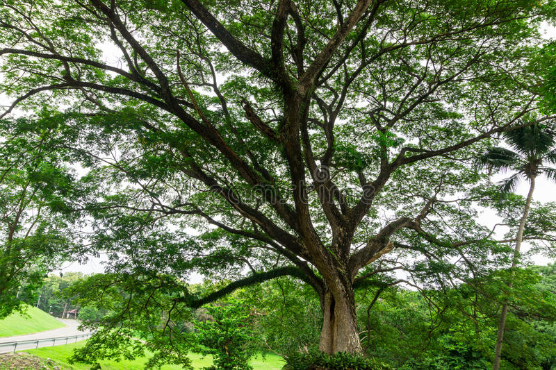 Μεγάλοι κορμός δέντρων και κλάδος δέντρων στον υπαίθριο κήπο στοκ εικόνα με δικαίωμα ελεύθερης χρήσης