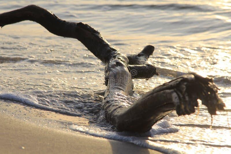 Μεγάλος κλώνος στην άμμο στοκ φωτογραφία με δικαίωμα ελεύθερης χρήσης