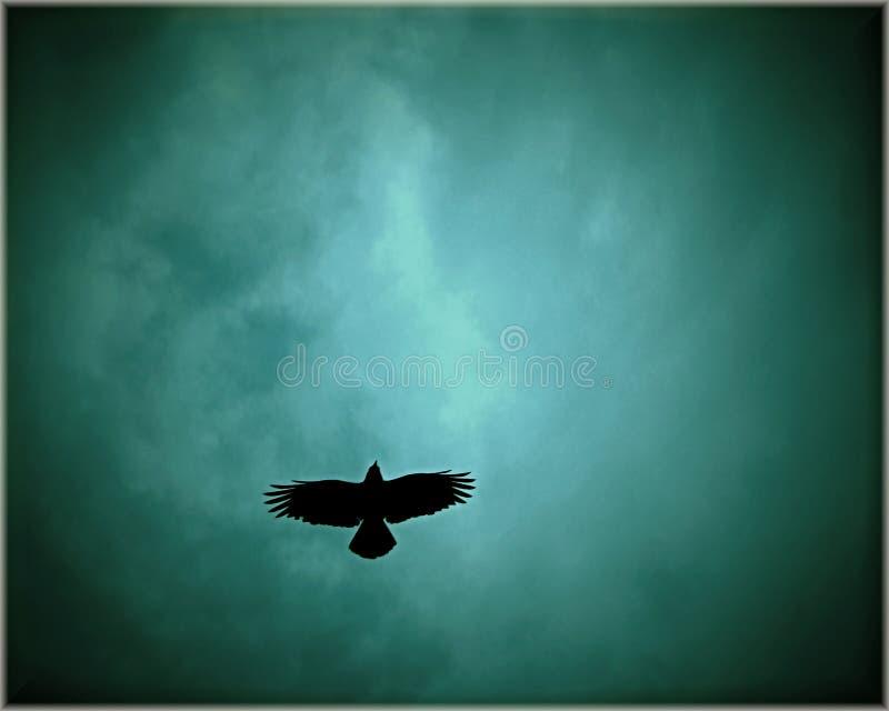 Μεγάλος μαύρος τίτλος πουλιών προς τον ουρανό κάτω από τη θύελλα στοκ φωτογραφία με δικαίωμα ελεύθερης χρήσης
