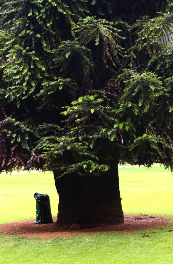 Μεγάλο δέντρο με το σκουπιδοτενεκές στο ooty κήπο στοκ εικόνες