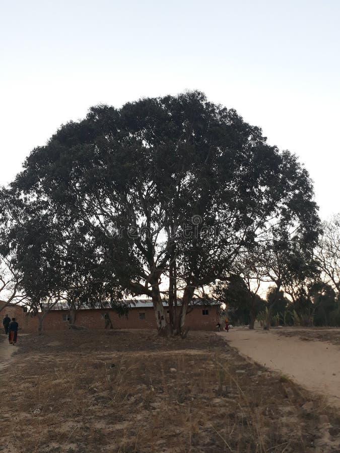 Μεγάλο αρκετά πράσινο δέντρο στοκ φωτογραφίες