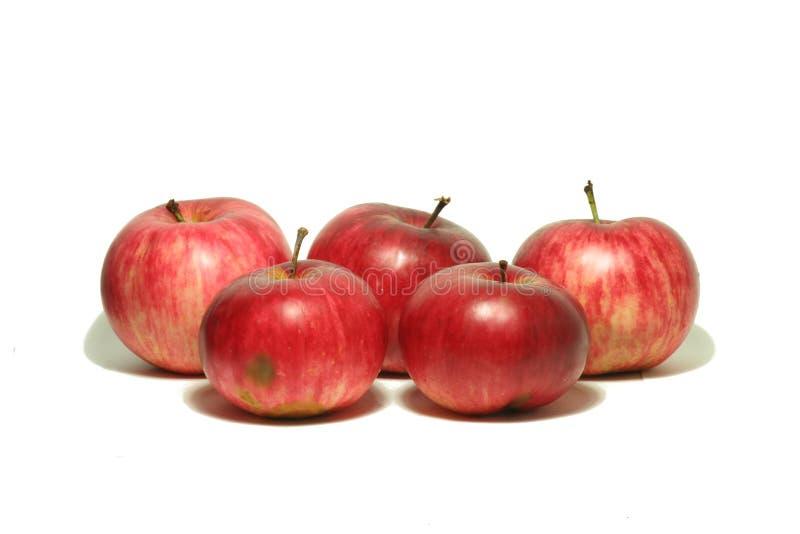 Μεγάλο κόκκινο μήλο από τον κήπο 9 στοκ εικόνα με δικαίωμα ελεύθερης χρήσης