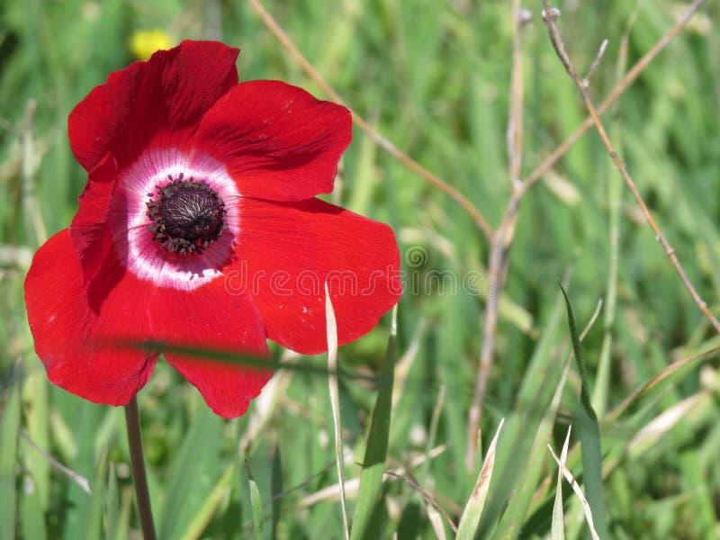 μεγάλο κόκκινο στοκ φωτογραφία με δικαίωμα ελεύθερης χρήσης