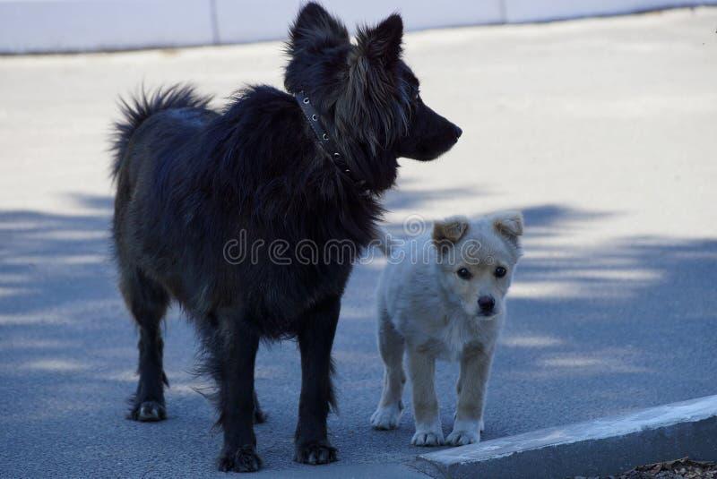 Μεγάλο μαύρο σκυλί και άσπρο κουτάβι που στέκονται στο πεζοδρόμιο στοκ εικόνα