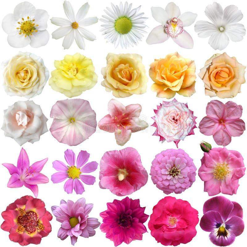 Μεγάλο σύνολο διάφορων λουλουδιών στοκ φωτογραφίες