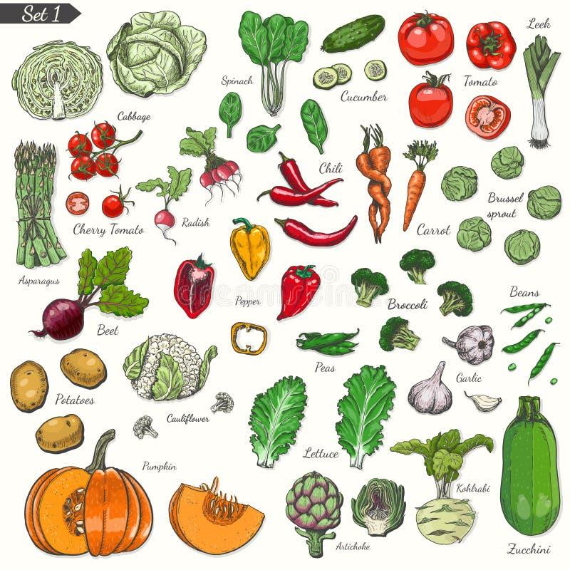 Μεγάλο σύνολο χρωματισμένων λαχανικών στο ύφος σκίτσων ελεύθερη απεικόνιση δικαιώματος