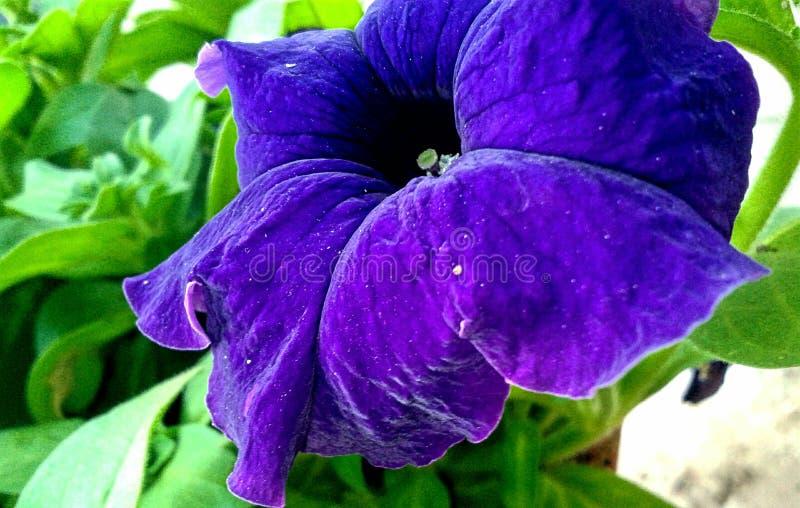 μεγάλο όμορφο λουλούδι στοκ εικόνα με δικαίωμα ελεύθερης χρήσης