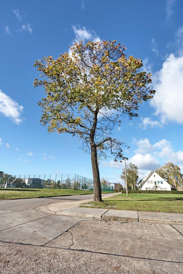 Μεγαλοπρεπές δέντρο σε μια γωνία του δρόμου, κάτω από έναν μπλε νεφελώδη ουρανό φθινοπώρου στοκ εικόνες με δικαίωμα ελεύθερης χρήσης