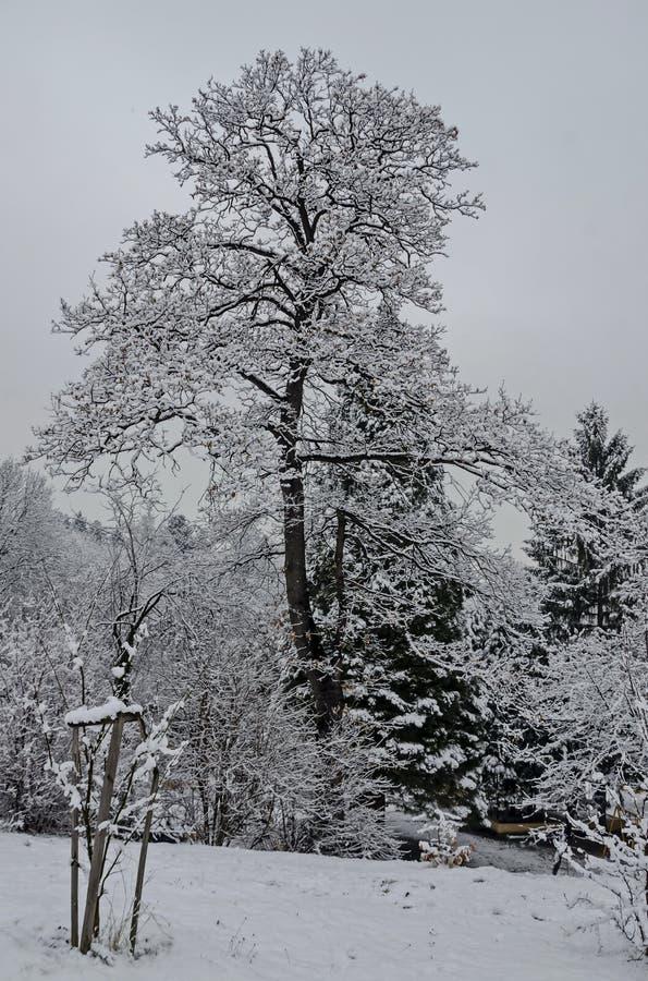 Μεγαλοπρεπής άποψη των χιονωδών δέντρων και της γωνίας παιδιών στο χειμερινό πάρκο, Bankya στοκ εικόνες