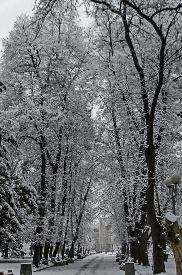 Μεγαλοπρεπής άποψη των χιονωδών δέντρων και του πάγκου στο χειμερινό πάρκο, Bankya στοκ εικόνες