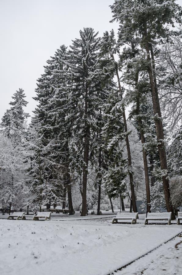 Μεγαλοπρεπής άποψη των χιονωδών δέντρων και του πάγκου στο χειμερινό πάρκο, Bankya στοκ φωτογραφία
