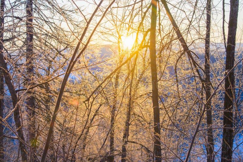 Μεγαλοπρεπής ανατολή στο τοπίο χειμερινών βουνών Ο ήλιος δίνει έμφαση στους κλάδους δέντρων που καλύπτονται με τον πάγο και το χι στοκ φωτογραφία