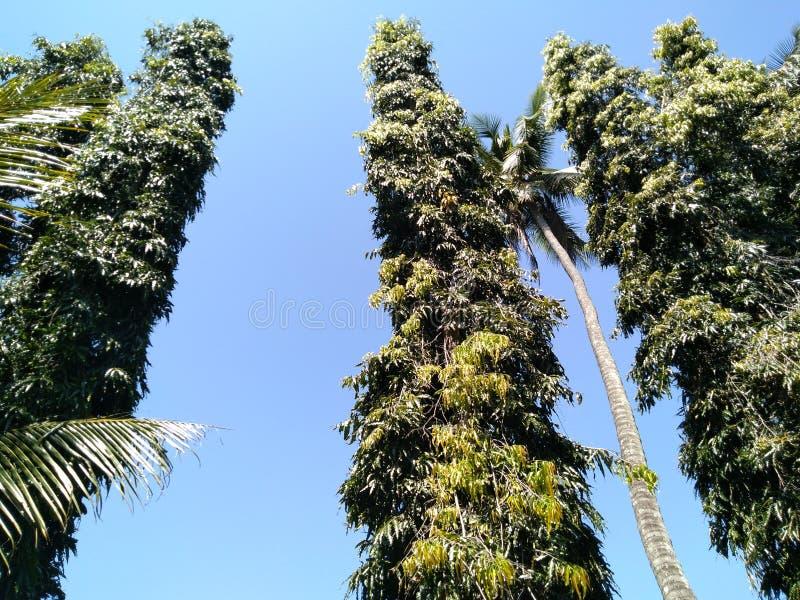 Μεγαλύτερα δέντρα βουνών στοκ φωτογραφίες με δικαίωμα ελεύθερης χρήσης