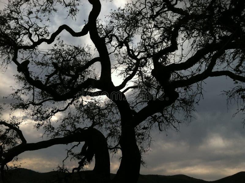 μεγαλοπρεπές δρύινο δέντρο στοκ εικόνα