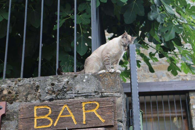 Μεθυσμένη γάτα στοκ εικόνα