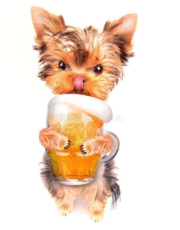 Μεθυσμένο σκυλί με την μπύρα στοκ εικόνα με δικαίωμα ελεύθερης χρήσης