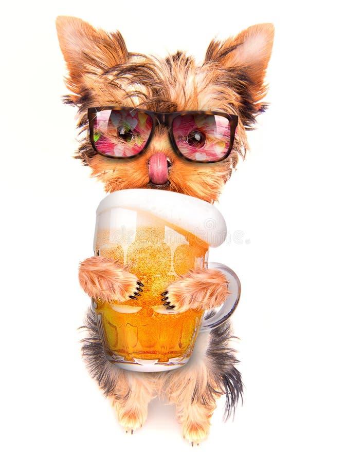 Μεθυσμένο σκυλί με την μπύρα στοκ εικόνα
