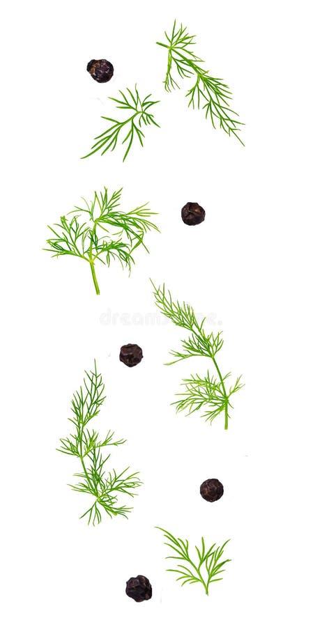 Μειωμένα φύλλα άνηθου και μαύρα σιτάρια πιπεριών που απομονώνονται στο λευκό στοκ φωτογραφία με δικαίωμα ελεύθερης χρήσης