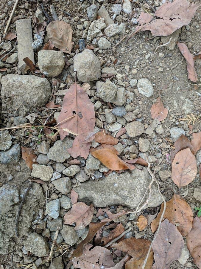 Μειωμένα φύλλα στο έδαφος στοκ φωτογραφία με δικαίωμα ελεύθερης χρήσης