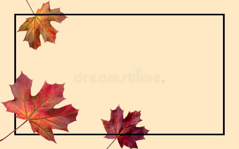 μειωμένα φύλλα φθινοπώρο&upsilo Φθινοπωρινή πτώση φυλλώματος και φύλλο λευκών που πετά στη θαμπάδα κινήσεων αέρα ζωηρόχρωμο στεφά διανυσματική απεικόνιση