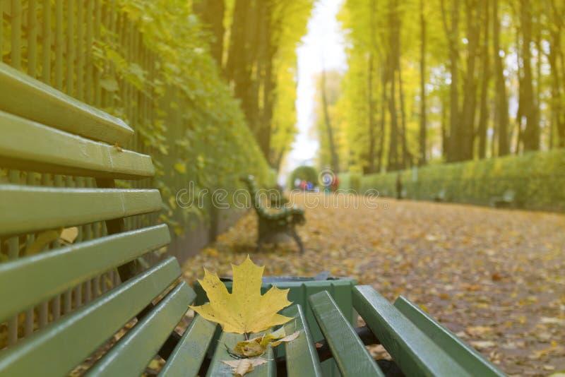 μειωμένα φύλλα Φθινόπωρο στο πάρκο πόλεων στα κίτρινα φύλλα στοκ εικόνες με δικαίωμα ελεύθερης χρήσης