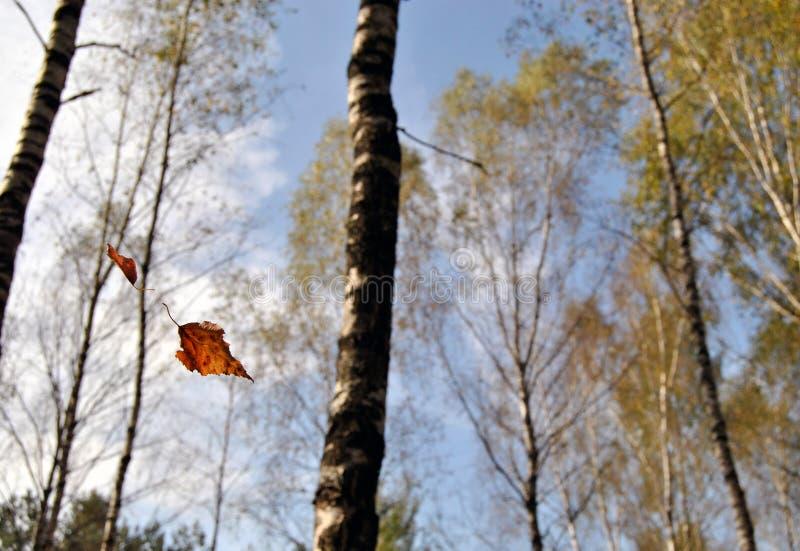 μειωμένα φύλλα στοκ φωτογραφία
