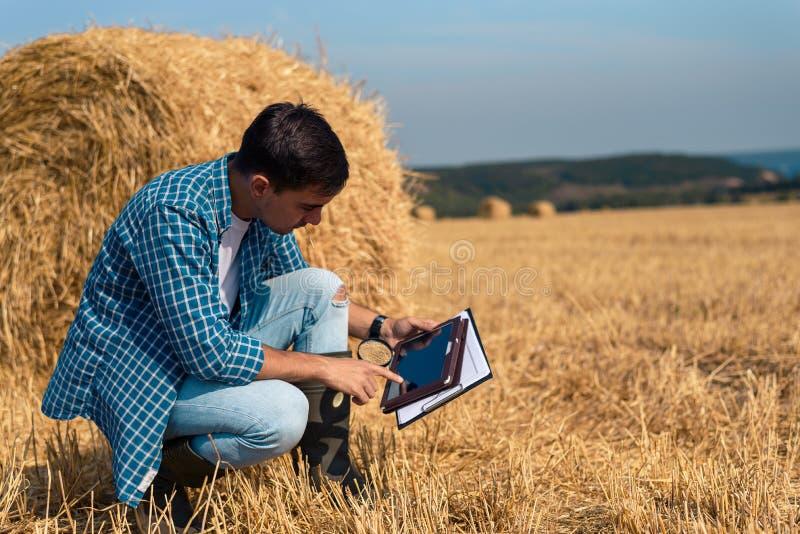 Μελέτες οι νέες αρσενικές αγροτών γεωπόνων βοτανολόγων έκοψαν το σανό με μια ενίσχυση - γυαλί και μια ταμπλέτα σε έναν τομέα ενάν στοκ εικόνα