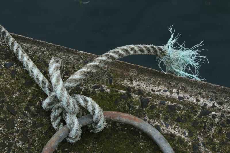 Μελέτη του σχοινιού και του κόμβου στοκ εικόνα με δικαίωμα ελεύθερης χρήσης