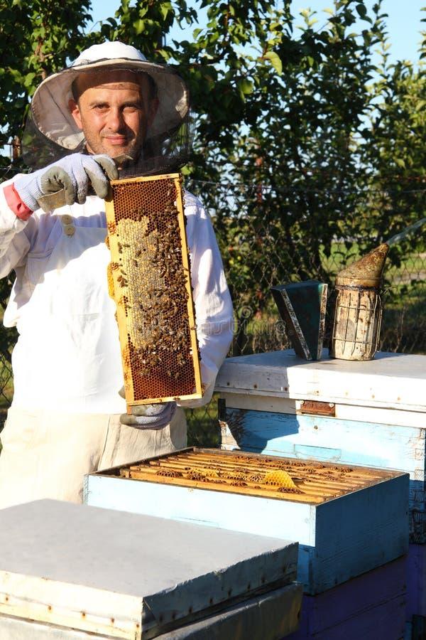 μελισσοκομία στοκ φωτογραφίες
