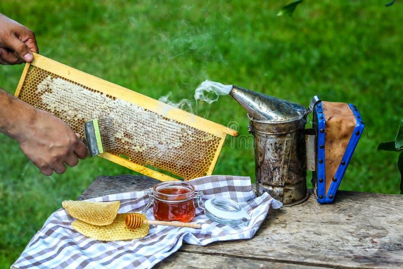 Μελισσοκόμος κινηματογραφήσεων σε πρώτο πλάνο που εκπωματίζει την κηρήθρα με το ειδικό δίκρανο μελισσοκομίας Ακατέργαστο μέλι που στοκ εικόνα