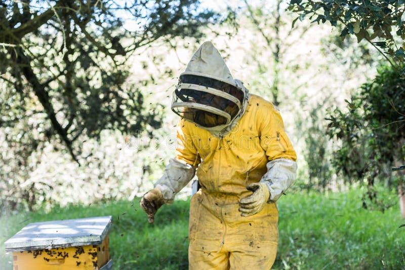 Μελισσοκόμος, μέλισσες που πετά κοντά στην κηρήθρα στοκ εικόνες