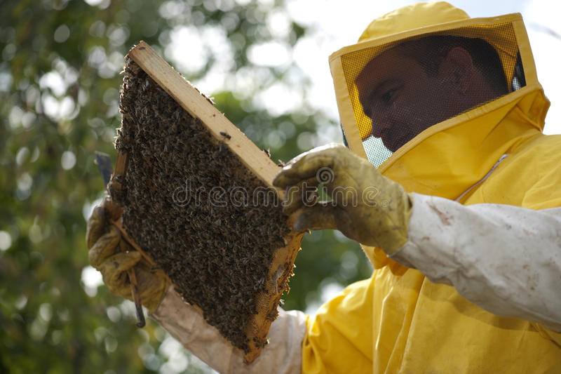 Μελισσοκόμος με την κηρήθρα στοκ εικόνα