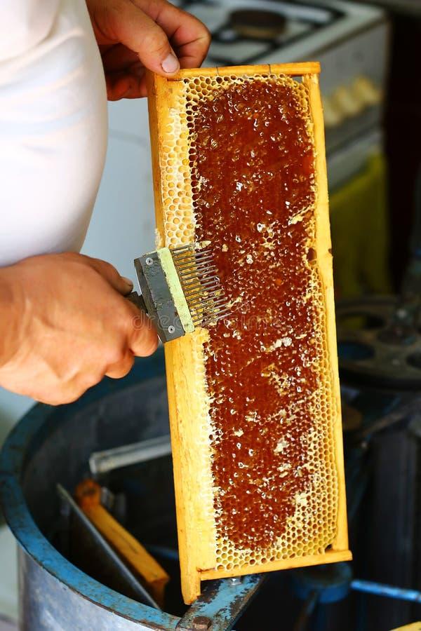 Μελισσοκόμος που εκπωματίζει την κηρήθρα με το ειδικό δίκρανο μελισσοκομίας Ακατέργαστο μέλι που συγκομίζεται από τις κυψέλες μελ στοκ φωτογραφία