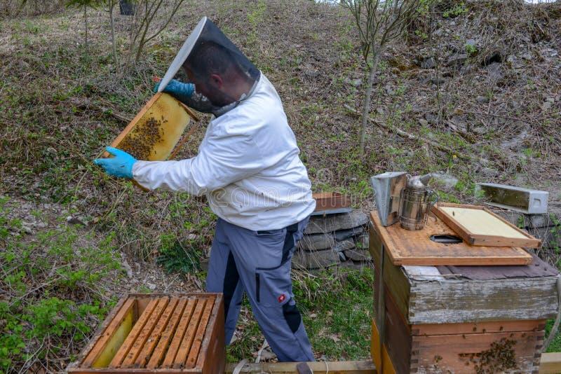 Μελισσοκόμος που ελέγχει την παραγωγή του μελιού του στο Wolfenschissen στις ελβετικές άλπεις στοκ φωτογραφία
