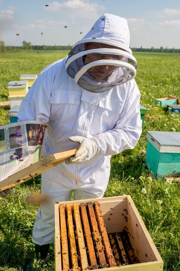 Μελισσοκόμος στην εργασία κατά τη διάρκεια του χρόνου άνοιξη που προστατεύεται από το κοστούμι στοκ εικόνα με δικαίωμα ελεύθερης χρήσης