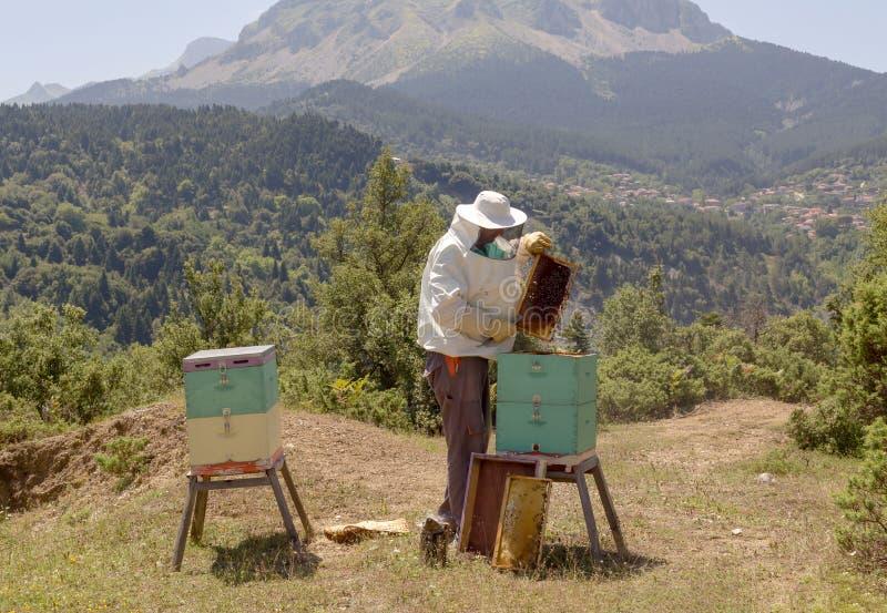 Μελισσοκόμος στην εργασία στα βουνά στοκ εικόνες