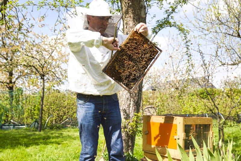 Μελισσοκόμος στο μελισσουργείο Ο μελισσοκόμος εργάζεται με τις μέλισσες και τις κυψέλες στο μελισσουργείο στοκ εικόνα