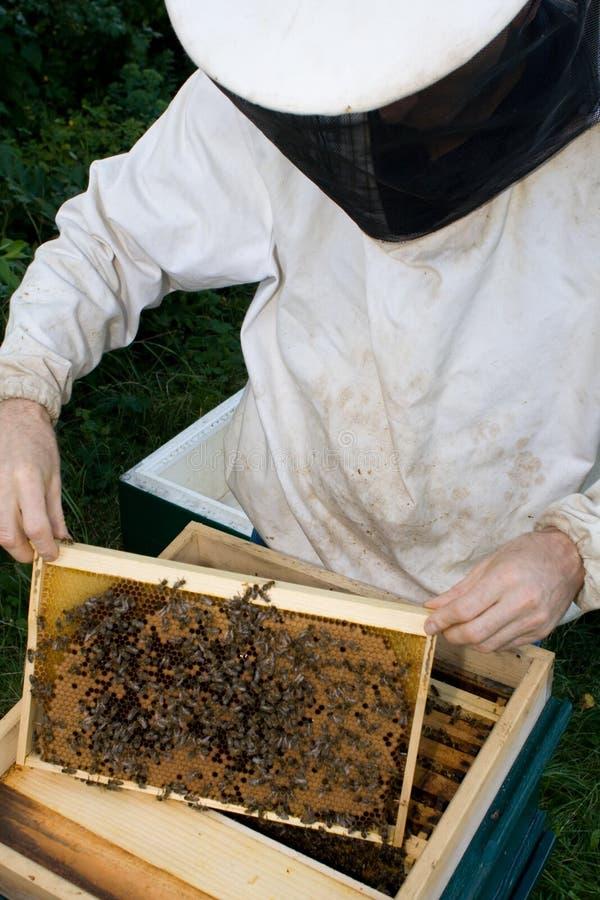 Μελισσοκόμος #1 στοκ φωτογραφία με δικαίωμα ελεύθερης χρήσης