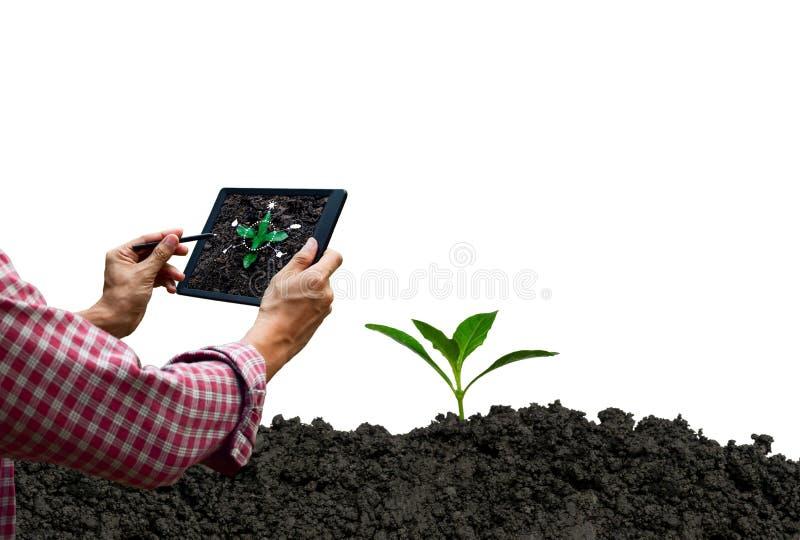 Μελλοντική προσοχή δέντρων τεχνολογίας ταμπλετών ελέγχου της Farmer και δέντρο στοκ εικόνα