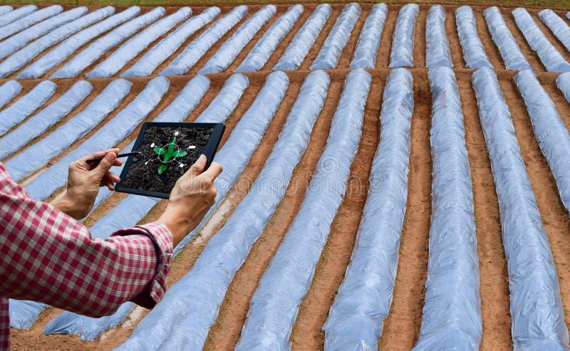 Μελλοντική προσοχή δέντρων τεχνολογίας ταμπλετών ελέγχου της Farmer και δέντρο στοκ εικόνες με δικαίωμα ελεύθερης χρήσης