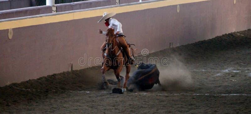 Μεξικάνικος κτύπος αναβατών κάτω από έναν μόσχο στοκ φωτογραφία