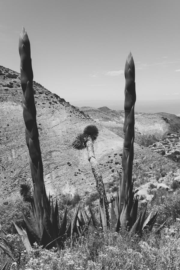 Μεξικάνικο τοπίο με χωριό και κάκτο στοκ φωτογραφίες με δικαίωμα ελεύθερης χρήσης